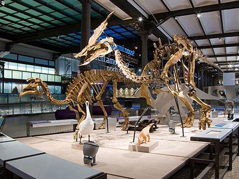 палеонтология лаборатория пополнение экземпляры уникальность динозавры